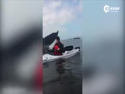 实拍加拿大青年划独木舟 突遇巨鲸摆尾