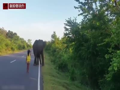 震惊!斯里兰卡女孩用手势控制住野生大象