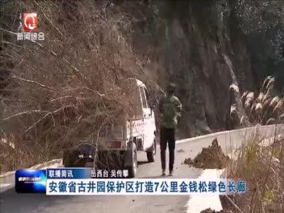安徽省古井园保护区打造7公里金钱松绿色长廊
