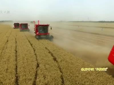 """【奋力夺取""""双胜利""""】河北:3305万亩小麦开镰收割"""