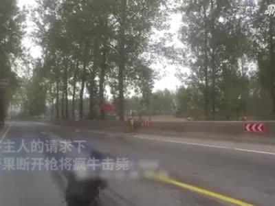 疯牛受惊冲撞行人车辆,特警开枪击毙