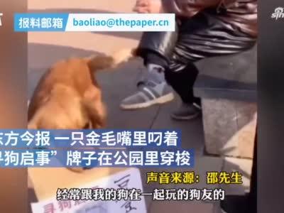 新乡一狗狗叼牌寻找丢失玩伴 在一起玩耍的公园流泪