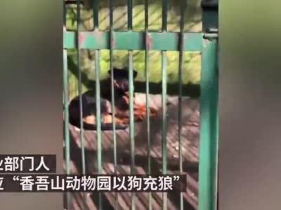 """咸宁林业局回应""""动物园以狗充狼"""":原本有狼,已年老死亡"""