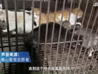 上海猫咪失踪定位显示身在千里之外 疑似深陷大型贩猫黑窝点