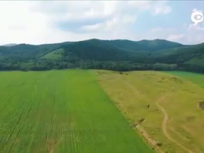 夏日呼伦贝尔:绿沁心野