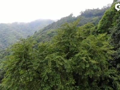 水青树短视频
