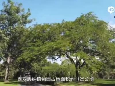 全球连线 COP15,为什么在云南?
