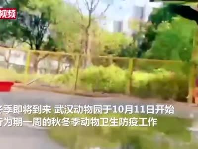 武汉#动物园百只火烈鸟孔雀排队打疫苗# 打完还有板蓝根[鼓掌]